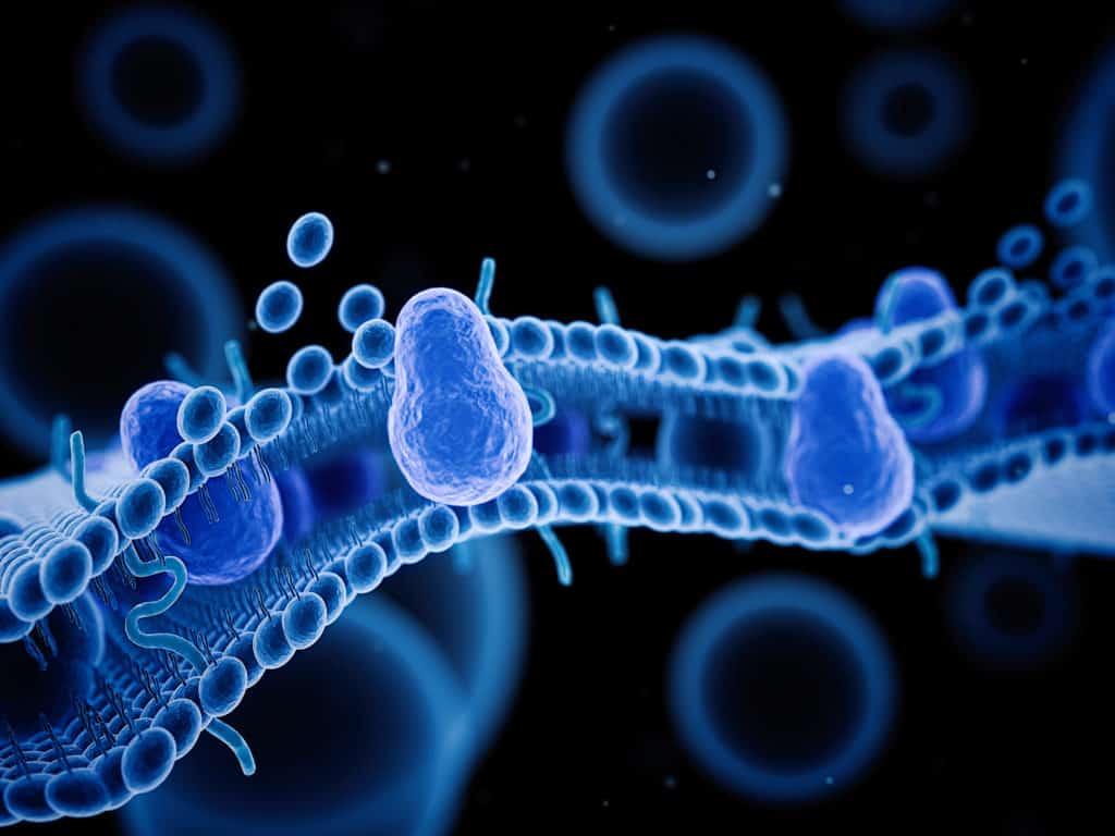 phosphatidylserine,phosphatidylserine benefits,phosphatidylserine sleep,what is phosphatidylserine,phosphatidylserine cortisol,phosphatidylserine supplement,phosphatidylserine side effects,phosphatidylserine amazon,phosphatidylserine dosage,phosphatidylserine complex,
