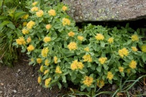 rhodiola rosea,rhodiola rosea dosage,rhodiola rosea benefits,rhodiola rosea reddit,rhodiola rosea amazon,rhodiola rosea extract,rhodiola rosea side effects,rhodiola rosea dose,rhodiola rosea root,rhodiola rosea roots,rhodiola rosea reviews,rhodiola rosea walmart,rhodiola rosea tea