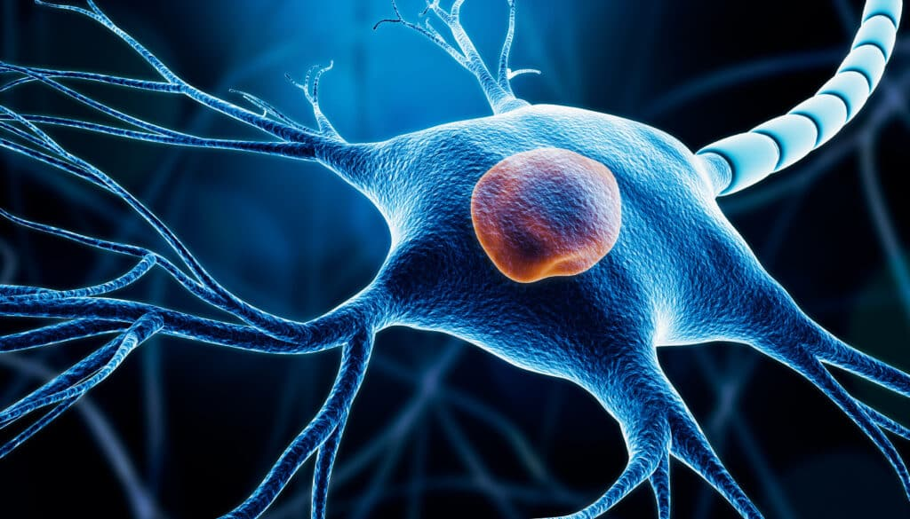 How glutamate excitotoxicity effects brain function