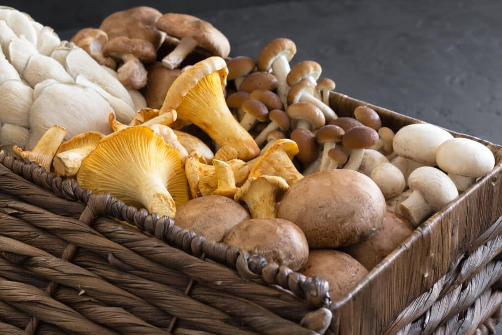mushroom supplements,are mushroom supplements good for you,paul stamets mushroom supplements,best mushroom supplements,are mushroom supplements safe,best mushroom supplements reddit,mushroom supplements benefits,mushroom supplements for cancer