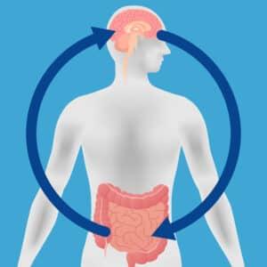 gut brain leaky gut leaky brain