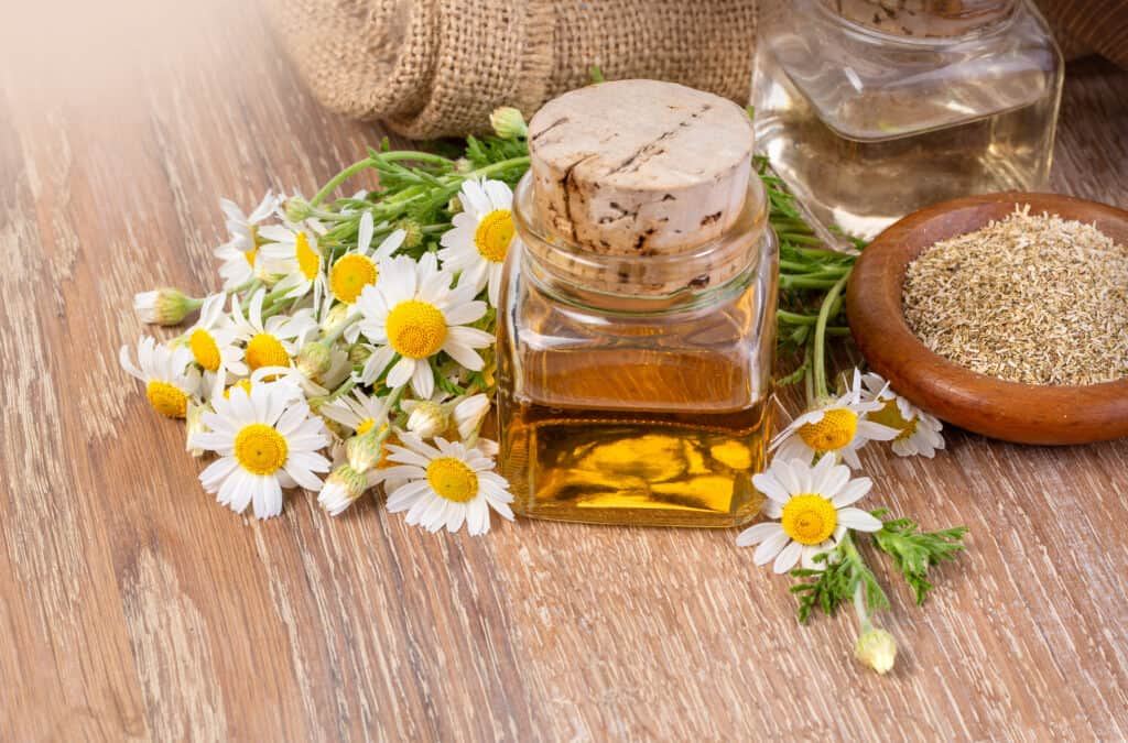 oil in glass bottle with fresh chamomile flowers on wooden