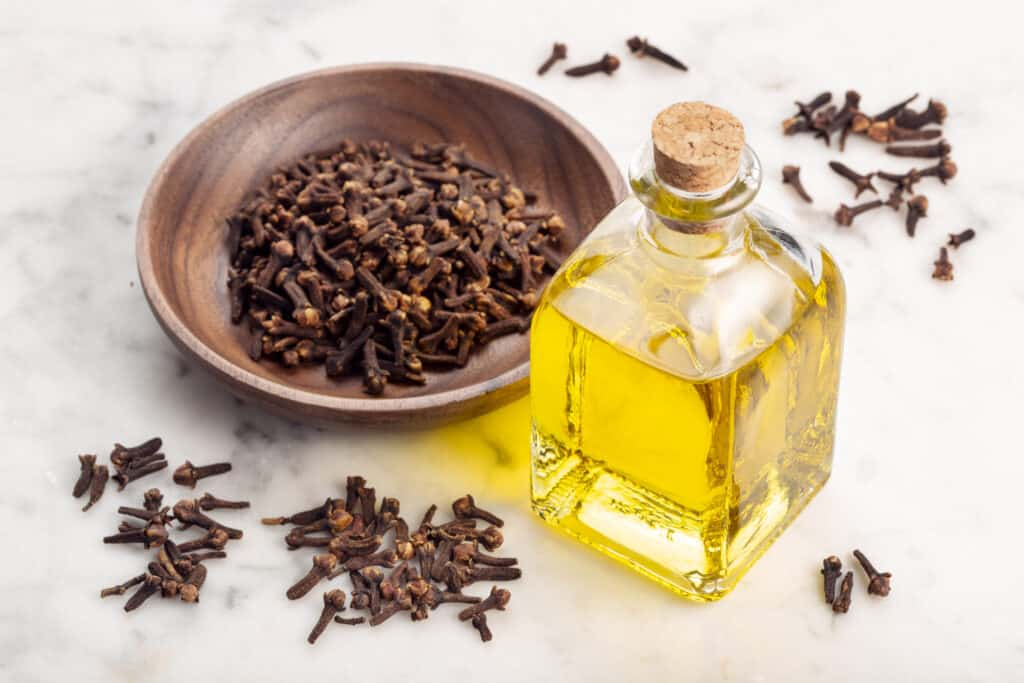Clove essential oil. Clove oil glass bottle for skin care or acne