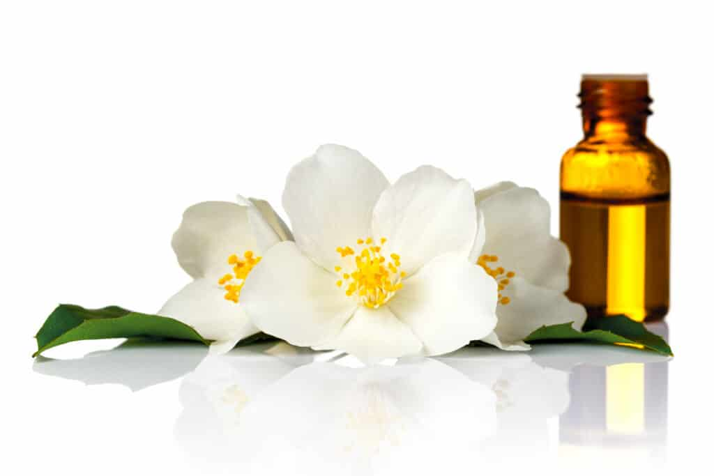 Jasmine flowers with essential oil on